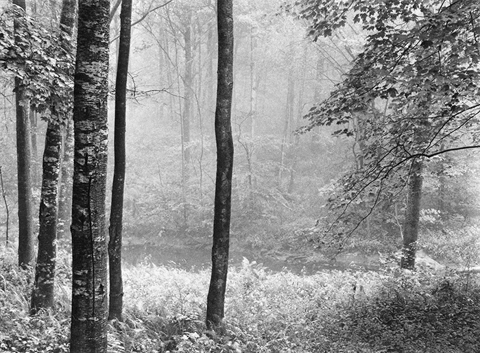 Paul Caponigro, Woods, Redding, Connecticut, 1969, Photograph