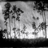 Lisa Elmaleh | Everglades | May 2012 | One, One Thousand | A Publication of Southern Photography