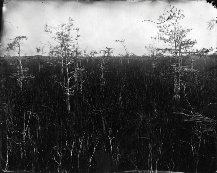 Lisa Elmaleh: Everglades
