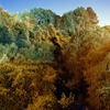Adam Kuehl | Kudzu | July 2012 | One, One Thousand | A Publication of Southern Photography